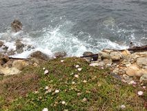 Sea-rock-plants living together. When sea, rock, and plants combined Royalty Free Stock Images