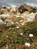Sea-rock-plants living together Royalty Free Stock Photography