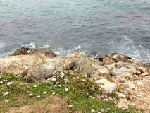 Sea-rock-plants living together. When sea, rock, and plants combined Royalty Free Stock Photos