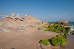 Sea rocks covered in green moss on the coast Stock Images