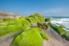 Sea rocks covered in green moss on the coast Stock Photography