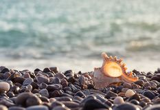 Sea rocky shore with a beautiful seashell Royalty Free Stock Images