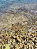 Sea& x27; s自然 免版税库存图片