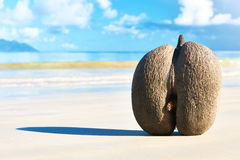 Sea's coconuts (coco de mer) on beach at Seychelles Royalty Free Stock Photos