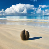 Sea's coconuts (coco de mer) on beach at Seychelles Stock Image
