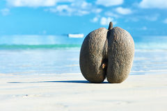 Sea's coconuts (coco de mer) on beach at Seychelles Stock Photos