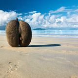 Sea's coconuts (coco de mer) on beach at Seychelles Stock Photo