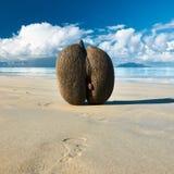 Sea's coconuts (coco de mer) on beach at Seychelles Stock Image