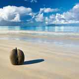 Sea's coconuts (coco de mer) on beach at Seychelles Stock Images