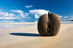 Sea's coconuts (coco de mer) on beach at Seychelles Royalty Free Stock Image