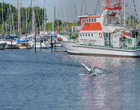Sea sailing yacht in port of city Groemitz, Northern Germany, coast of Baltic Sea am 09.06.2016. Travel, holiday at sea, landscape Royalty Free Stock Photos