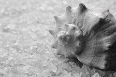 Sea salt crystals royalty free stock photo