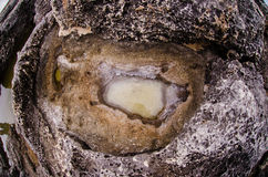 Sea salt deposits in a hole Stock Photos