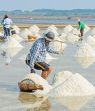 Sea salt harvesting in Thailand Royalty Free Stock Images