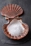 Sea salt in scallop sea shell on black rock stock images