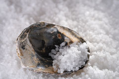 Sea salt in sea shell on salts background Stock Photos