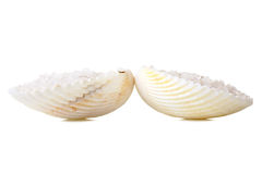 Sea salt in a shell Stock Photo