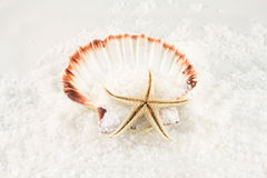 Sea salt, shells and starfish Royalty Free Stock Images
