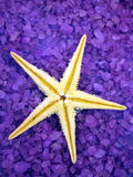 Sea salt and starfish Royalty Free Stock Image