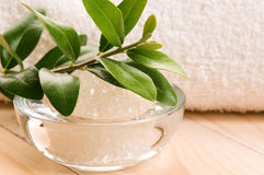 Free Sea Salt With Fresh Olive Branch Royalty Free Stock Photos - 20239658