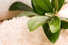 Free Sea Salt With Fresh Olive Branch Royalty Free Stock Image - 20239786