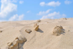 Sea  sand Stock Photos