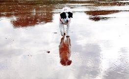 Sea sand and dog reflection Stock Photo