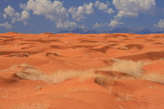 Sea of sand dunes on a desert Royalty Free Stock Images