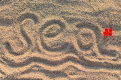 Sea in sand with flower Stock Images