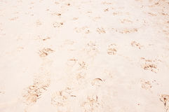 Sea sand with footprints Stock Photography