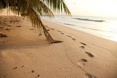 Sea sand and palm tree Royalty Free Stock Photos