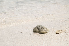 Sea sand and pebble . Summer beach background Royalty Free Stock Photos