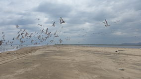 Sea,sand,seagull Royalty Free Stock Image