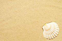 Sea sand with seashell. Top view with copy space. Summer background royalty free stock photos