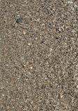 Sea Sand and Seashells Background Stock Photos