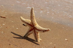 Sea sand and seastar Stock Image