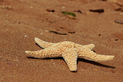 Sea sand and seastar Royalty Free Stock Images