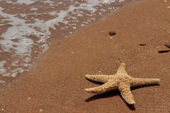 Sea sand and seastar Stock Photography