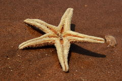 Sea sand and seastar Stock Images