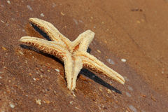 Sea sand and seastar Stock Photo
