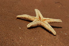 Sea sand and seastar Royalty Free Stock Photos