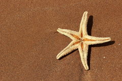 Sea sand and seastar Stock Photos