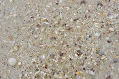 Sea sand and shells. Background of sand and sea shells Stock Image