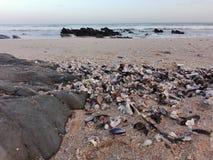 Sea sand shells stock images