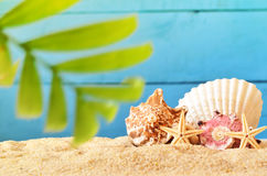 Sea sand with starfish and seashell on wooden background. Stock Photography