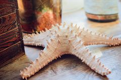 Sea sand with starfish and shells. Top view with copy space Royalty Free Stock Images