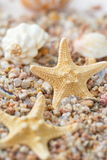 Sea sand with starfish and shells Stock Image