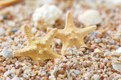 Sea sand with starfish and shells Royalty Free Stock Photo