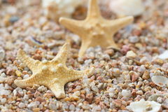 Sea sand with starfish and shells Royalty Free Stock Photos