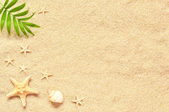 Sea sand with starfish and shells. Top view with copy space Royalty Free Stock Photo
